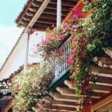 Piante e fiori da balcone: i tipi per inverno ed estate